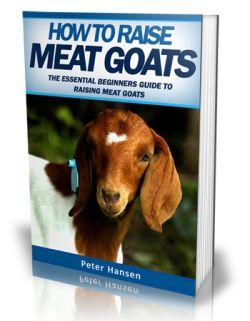 raising meat goats